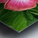 Awesome Petals Metal print