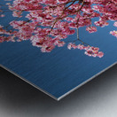 Cherry Blossom on Blue Metal print