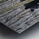 233-Perfect Profiles Metal print