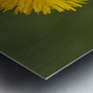 Dandelion macro Metal print