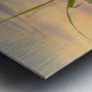 The force of nature  -  Force de la nature Metal print
