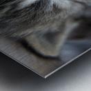 Kitten Face Metal print