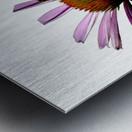 Daisy Bee Metal print