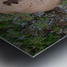 Cookie Mushroom Metal print