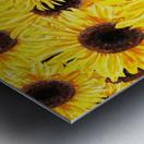 Sunflowers Field Watercolor Painting by Irina Sztukowski Metal print