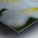 Bee On White Flower Photograph Metal print