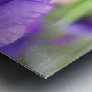 Blue Iris Photograph Metal print