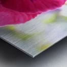 Pink Pansy Photograph Metal print