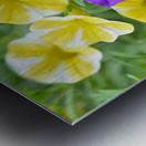 Beautiful Blue Flower In Yellow Flower Garden Photograph Metal print