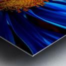 Beautiful Blue Flower_OSG Metal print