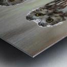 The Odd Couple - color Metal print