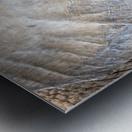 Elephant - APC-186 Metal print