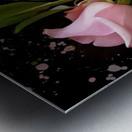 Pink Roses Metal print