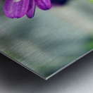 Waterdrop On Purple Flower Metal print