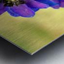 Purple And Blue Metal print