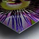 Purple Passion Flower Metal print