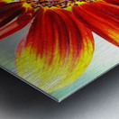 Autumn Sunflower Metal print