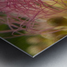 Pink Tangles Metal print
