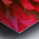 Red blossom  Metal print