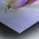 Orchid Poem Metal print