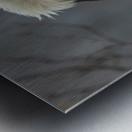 Bald eagle in tree Metal print