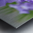 Purple Iris Photograph Metal print