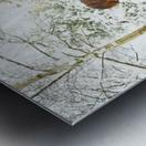 SNOWY APPALOOSA Metal print