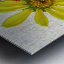 Pale yellow sea glass and zinnias Metal print