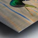 Canard Colvert Metal print