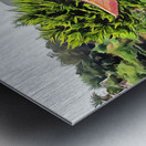 Oriental Gardens Madeira 4 Metal print