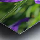 Purple Iris Impression metal