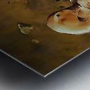 Buff Orpington Duck Preening Metal print