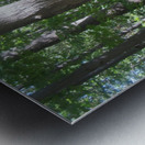 Landscape (267) Metal print