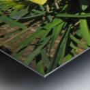 Flowers (35) Metal print