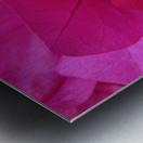 Flowers (95) Metal print