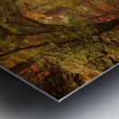 Colorful autumn forest Metal print
