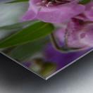 Pink Flowers Photograph Metal print