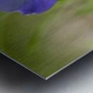 Wild Violet Metal print