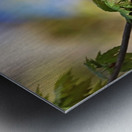 Yellow Warbler In Maple Tree Metal print