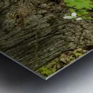 Trillium Woods 10 Metal print
