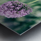 Three Purple Flowers Metal print