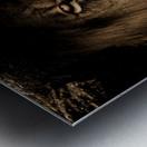 african lion wildcat mane closeup Metal print