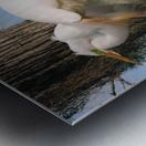 Mating Season - Great Egrets I Metal print