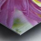 Fuscia-Colored Aster Metal print