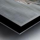 Brown Pelican II - HDR Metal print
