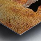 Flowering Gum Bark Metal print