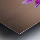 Purple Daisy Metal print
