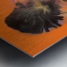 black orchid Metal print