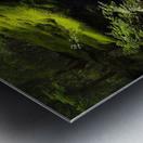 Trail of the Cedars Metal print