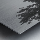 Foggy Forest Metal print